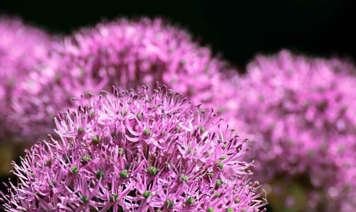 garden-nature-park-flower.jpg